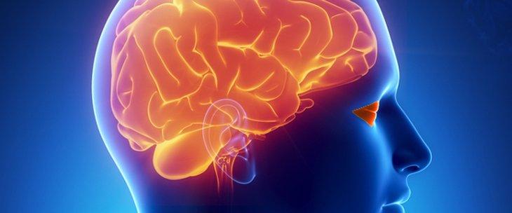 Главен мозък и очи Специалисти medipro