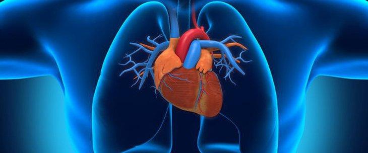 сърце кръвоносни съдове medipro
