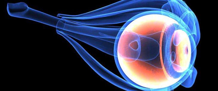 заден сегмент на окото